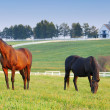 Stock Photo: Horse Farm