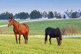 Fazenda de cavalos — Foto Stock