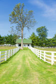 Horse farm — Stock Photo