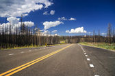 Road through burnt forest — Foto Stock