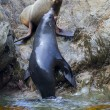 Sea Lion's life - Stock Photo