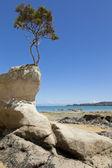 árbol de la roca — Foto de Stock