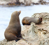 Sea Lion's life — Stock fotografie