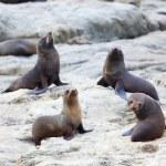 Sea Lion's life — Stock Photo #8509085
