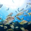 School of Fish - Stock Photo