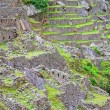 Stockfoto: Terraces of Machu Picchu