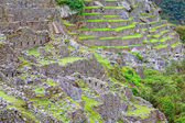 Terraces of Machu Picchu — Stock Photo