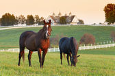Granja de caballos — Foto de Stock