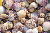 Shells, top view — Stock Photo