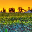 Country sunset — Stock Photo