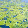 Algae on water - Stock Photo