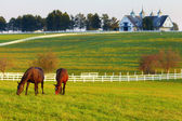 Horses on the Farm — Stockfoto