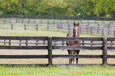 Cavallo in una fattoria — Foto Stock