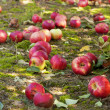 Apples on the ground -  