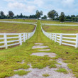Horse farm -  