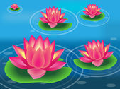 Water lilies and flowers — Stock Vector