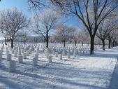 Frosty árboles en el cementerio nacional — Foto de Stock