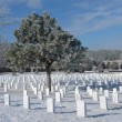 Frost cover tree at a Cemetery — Stock Photo #8963070