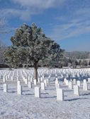Frost cover tree at a Cemetery — Stockfoto