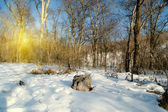 Winter snowy landscape — Stock Photo
