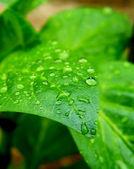 Wate drops on leaf — Stock Photo
