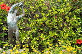 Status on the green hedge — Stock Photo