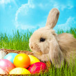 Easter bunny - Stock Photo