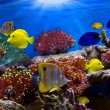 Tropical Fish - Stock Photo