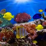 tropické ryby — Stock fotografie