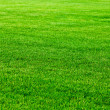 Green grass — Stock Photo #8036696