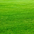 Green grass — Stock Photo #8037353