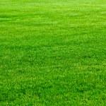 Green grass — Stock Photo #8037353