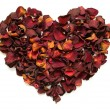 Rose petals — Stock Photo #8037406