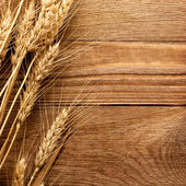 колос пшеницы — Стоковое фото