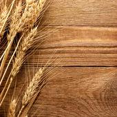 Espiga de trigo — Foto de Stock