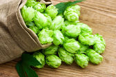 Hop in a bag — Stock Photo
