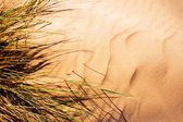 Grass on the sand — Stock Photo