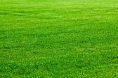 Grüne gras — Stockfoto