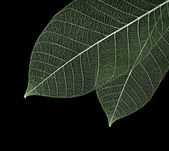 Close-up of leaf — Stock Photo