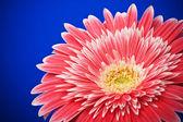 Flowers — Stock fotografie