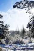Zimowy las — Zdjęcie stockowe