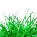 Green grass — Stock Photo #8138851
