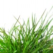 Green grass — Stock Photo #8138873