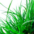 Green grass — Stock Photo #8138879