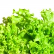Salad leaves — Stock Photo #8139477
