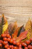 листья — Стоковое фото