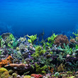 Coral Reef — Stock Photo #9296528