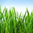 Grass is green — Stockfoto