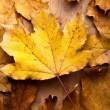 Leaves — Stock Photo #9297447