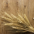 Spike of wheat — Stock Photo
